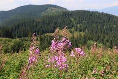 Wilde bloemen op weide in bergen stock foto
