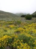 Wilde bloemen in platteland Stock Afbeeldingen
