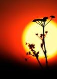 Wilde bloemen tegen de achtergrond van de zonsonderganghemel Royalty-vrije Stock Afbeeldingen