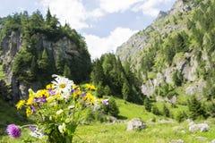 Wilde bloemen van de berg Royalty-vrije Stock Afbeeldingen