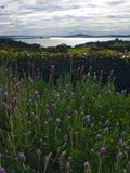 Wilde bloemen in Waiheke Nieuw Zeeland Royalty-vrije Stock Afbeeldingen