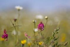 Wilde bloemen in weide op heldere dag Stock Afbeeldingen