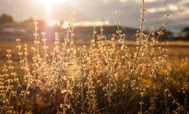 Wilde bloemen in zonsondergang royalty-vrije stock foto