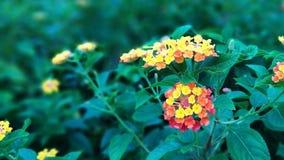 Wilde wilde bloemenbloei in clusters aan de kant van de weg stock foto's