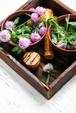 Wilde bloemklaver royalty-vrije stock foto's