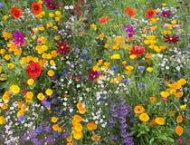Wilde bloemmengeling met papavers royalty-vrije stock afbeeldingen
