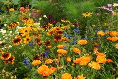 Wilde bloemtuin Stock Afbeelding