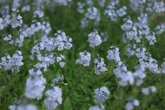 Wilde blubloemen Royalty-vrije Stock Fotografie