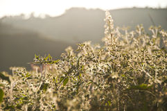 Wilde Blume. Stockbilder