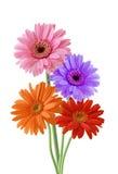 Wilde Blume Stockbild