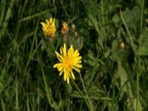 Wilde Blume stock footage