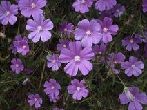 Wilde Blume Stockfotos