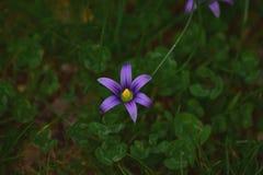 Wilde Blume Lizenzfreies Stockbild
