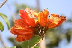 Wilde Blume stockbilder
