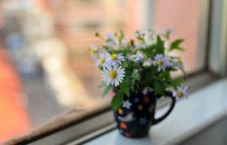 Wilde Blume in der Kappe lizenzfreies stockfoto