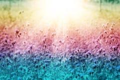 Wilde Blume der weißen Wiese an neuem backgr Natur des Morgensonnenaufgangs Lizenzfreie Stockbilder