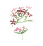 Wilde Blume des Aquarells auf weißem Hintergrund Lizenzfreies Stockfoto