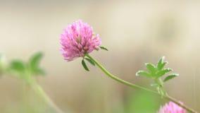 Wilde Blume im Wald stock video