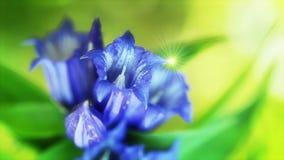 Wilde Blume im Wald stock footage