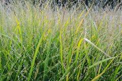 Wilde Blume pflanzt Wiese Lizenzfreies Stockfoto