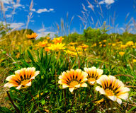 Wilde Blumen Stockfotos