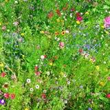 Wilde Blumen Stockfotografie