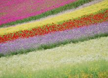 Wilde Blumen Lizenzfreie Stockfotografie