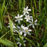 Wilde Blumen Lizenzfreies Stockfoto