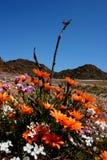 Wilde Blumen lizenzfreie stockbilder