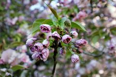 Wilde Blumen Stockbilder