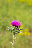 Wilde Blumen Lizenzfreie Stockfotos