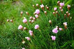 Wilde Blumen Stockfoto