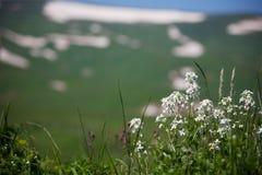 Wilde Blumen Stockfotos