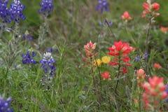 Wilde Blumen auf den Gebieten von Süd-Texas Stockbilder