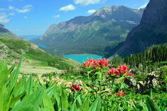 Wilde Blumen auf der Spur zu Grinnell-Gletscher und See im Glacier Nationalpark Stockfotos