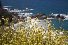 Wilde Blumen auf Hwy 1 Stockfoto