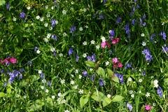 Wilde Blumen-Auswahl Stockbild