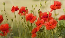 Wilde Blumen in Bezug auf die Wiese Stockfoto