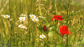 Wilde Blumen in Bezug auf die Wiese Stockfotos
