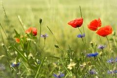 Wilde Blumen in Bezug auf die Wiese Lizenzfreie Stockfotos
