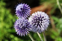 Wilde Blumen Blumen Lizenzfreies Stockbild