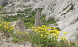 Wilde Blumen in Cappadocia Stockfotos