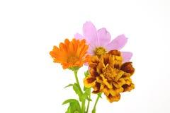 Wilde Blumen der Blüte Lizenzfreies Stockbild