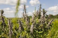 Wilde Blumen der gelben und violetten Wiese und grünes Gras lizenzfreie stockfotografie