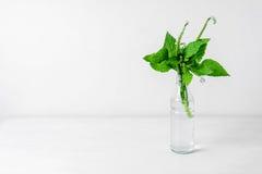 Wilde Blumen in der Glasflasche Lizenzfreies Stockbild