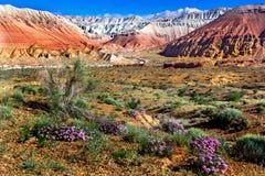 Wilde Blumen in der Wüste auf einem Hintergrund von mehrfarbigen Bergen und von bewölktem Himmel Lizenzfreies Stockfoto