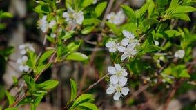 Wilde Blumen der Wiese auf dem Gebiet stock footage