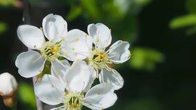 Wilde Blumen der Wiese auf dem Gebiet stock video footage