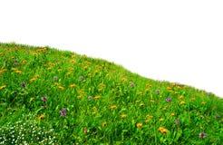 Wilde Blumen in der Wiese Stockfoto