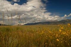 Wilde Blumen der wilden Gräser Stockfotos